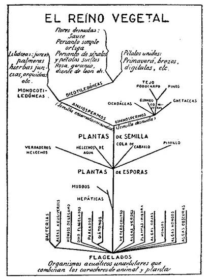 Fundamentos primeros de la Teosofía, por C. Jinarajadasa 1912 4