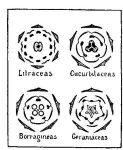 Fundamentos primeros de la Teosofía, por C. Jinarajadasa 1912 87