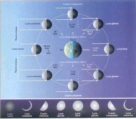 Las fases lunares for Fase lunar julio 2016