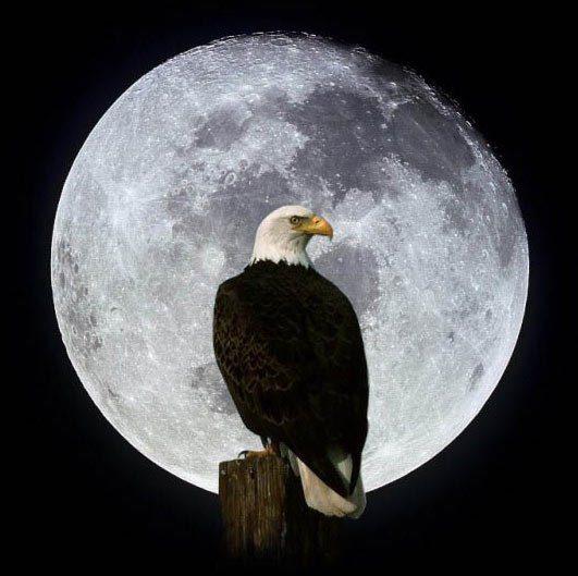 Aguila en la Luna