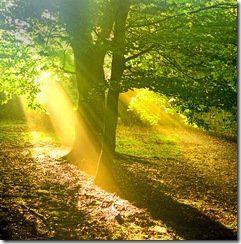 luz árbol