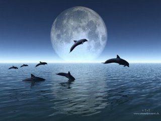 Tierra con delfines