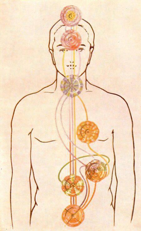 Los chakras en el ser humano