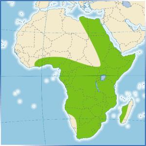 Isla de africa