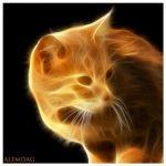 Gato-de-fuego