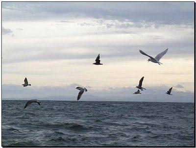Mar Gaviotas