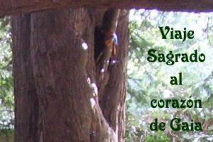 Viaje Sagrado al Corazón de Gaia: AVALON. Últimas Plazas!!!