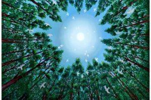 ¿Qué es la Ascensión del Ser Humano?… del 22 de Diciembre del Año 2012