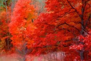 Los Colores Interiores  Reporte Cósmico del Tiempo por Mark Borax  Septiembre de 2010