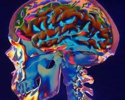 El Cerebro del Corazón Por Rollin McCraty, PhD