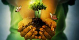 rec3 servicio energetico para colaborar en la purificacion del elemento tierra