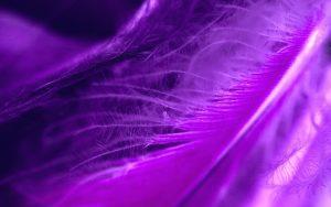 Pluma-violeta