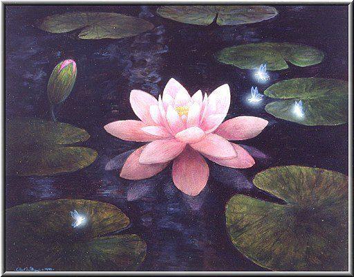 1 Night Bloom 1995