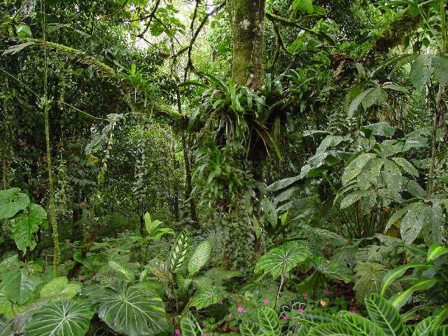 selva REC3 Ofrenda de GRATITUD desde la Humanidad Unida a todo lo Creado