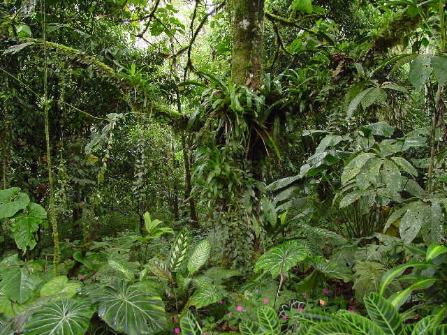 selva REC3 RECORDATORIO Ofrenda de GRATITUD desde la Humanidad Unida a todo lo Creado