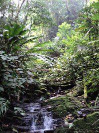 Expedición a Paititi 8 al 22 agosto de 2010, informe de Elyah Aram 15