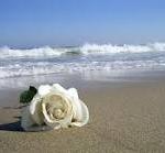 rosas-blancas-150x139