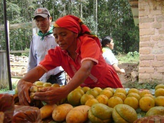 mujer cogiendo fruta hermandadblanca.org