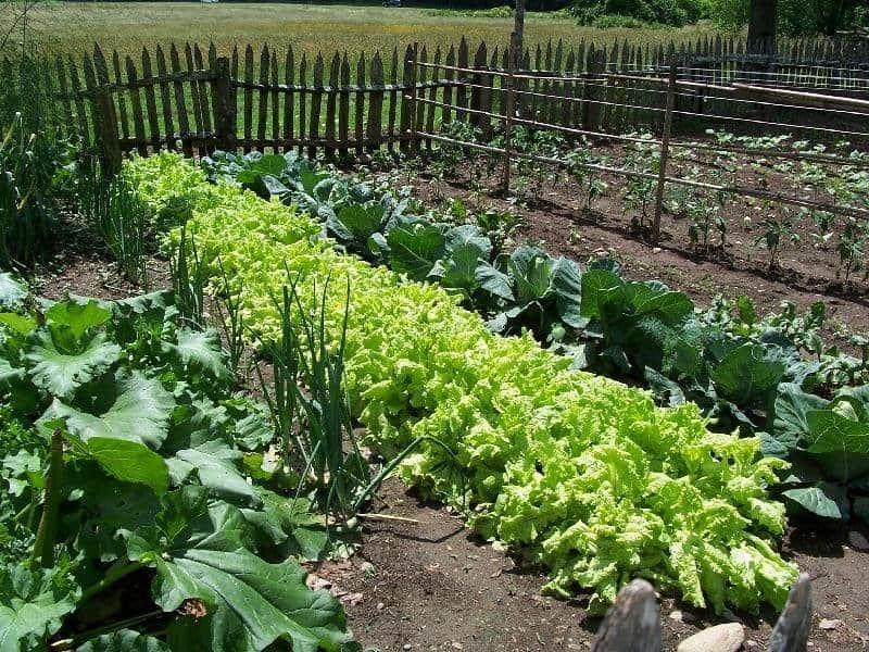 verdura ecologica hemandadblanca.org