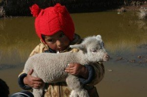 niño con una ovejita hermandadblanca.org
