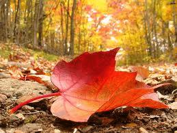 otoño hermandadblanca.org