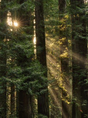 bosque con arboles hermandadblanca.org