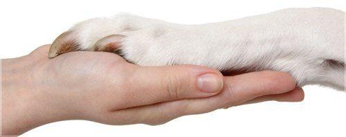 reiki para animales hermandadblanca.org