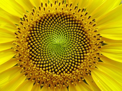 Fibonacci5 Las 10 semillas más saludables