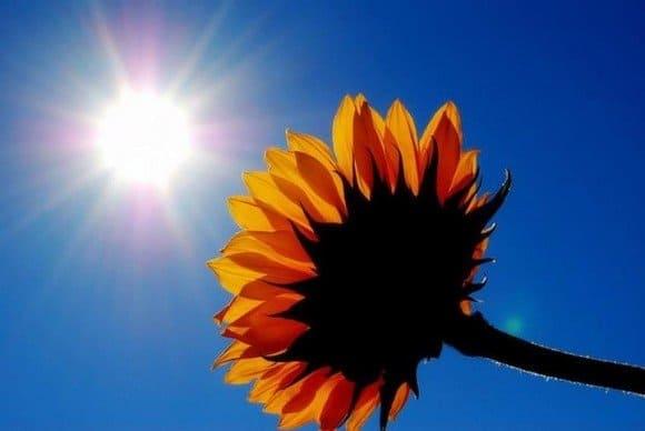 sol flor y luz hermandadblanca.org