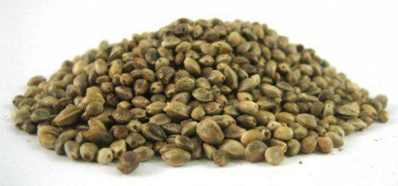 cañamo 590x276 580x271 Las 10 semillas más saludables