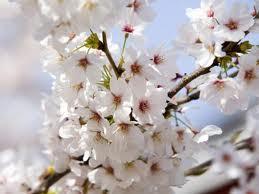 flores blancas AA Gabriel