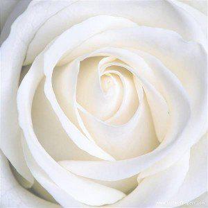 rosa maria magdalena hermandadblanca.org