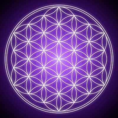 Flor de la VIDA  de color violeta