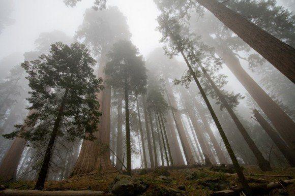 Montaña de sequoias