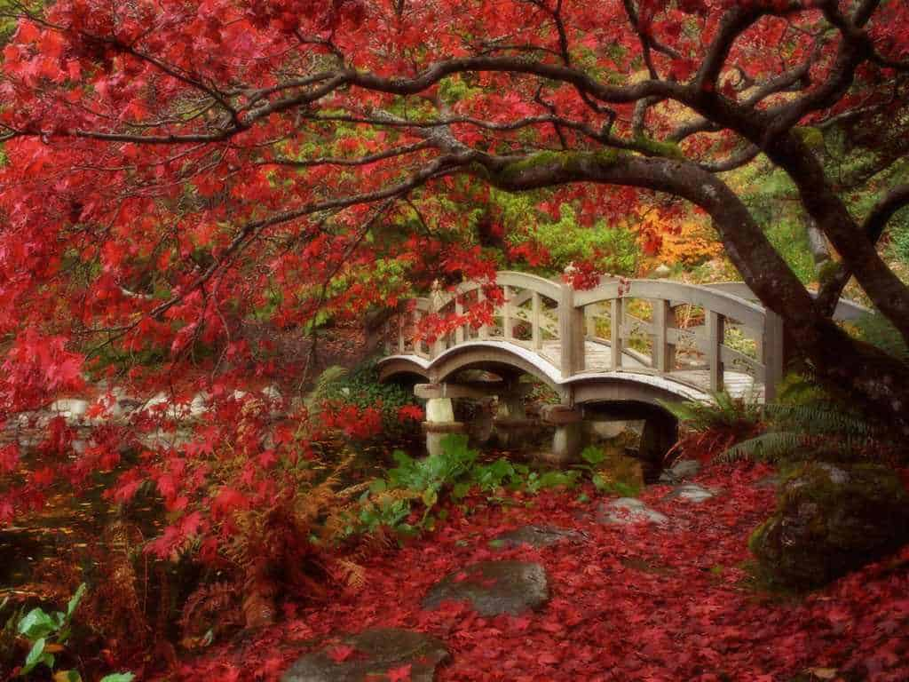 puente con flores