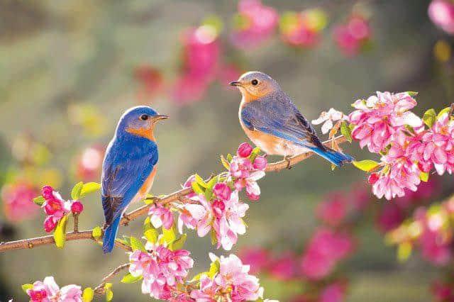 vivir es ser feliz - flores de color rosa y pájaros