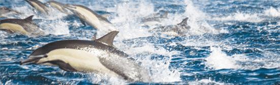 Delfines jugando en el mar