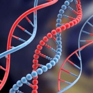 El ADN es un internet biológico, traducción de Abjini Arráiz