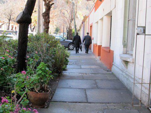 camino de flores para pasear