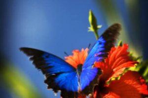 Paz interior: qué es y cómo encontrarla dentro de ti mismo