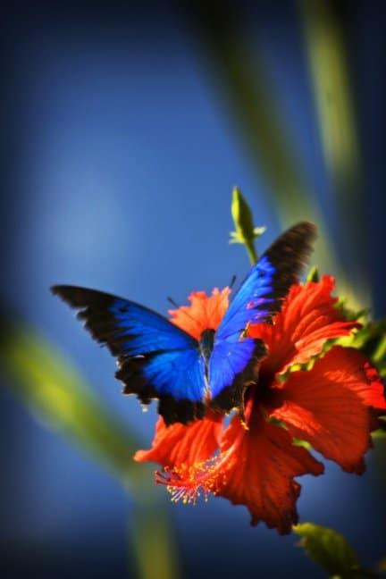 Mariposa de colores con mucha fuerza