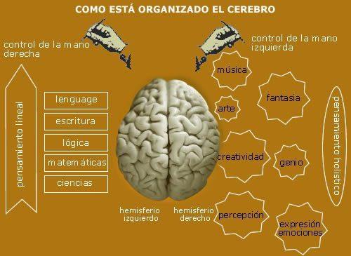 cerebro- randallita