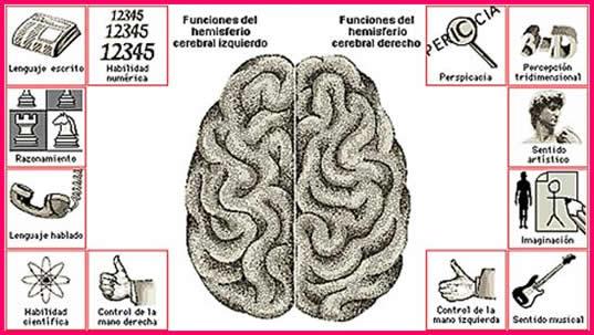 e_revista25_clip_funciones hemisferio cerebrales