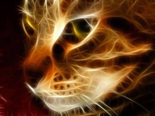 energía de los gatos