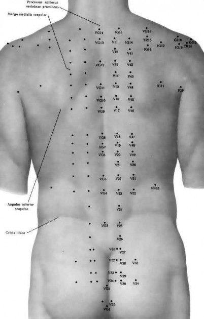 espalda puntos meridianos -randallita