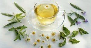 Fitoterapia y plantas medicinales para el otoño y el invierno