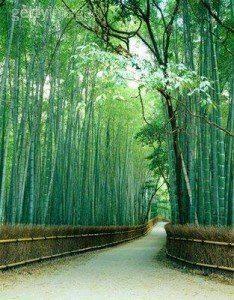 La Gnosis china: Las cinco cualidades de los sabios filósofos