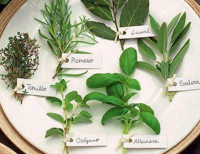 cuidados_plantas_aromaticas- hierbas aromáticas