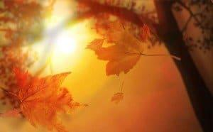 otoño hojas que caen doradas hermandadblanca.org