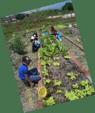 agricultura con niños